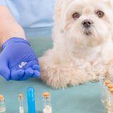 L'homéopathie pour mon chien ?