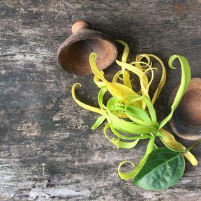 La joie : l'huile essentielle d'Ylang-Ylang